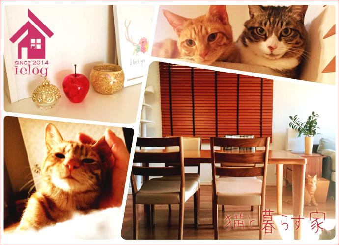 ielog -猫と暮らす家