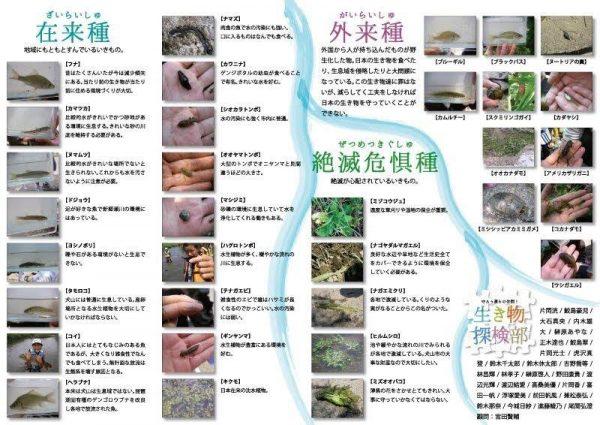 生き物探検部 僕らの生きものマップ 新郷瀬川1