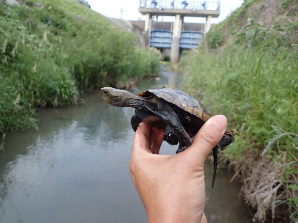 夏休みの思い出に!近場の川でガサガサを楽しむ方法