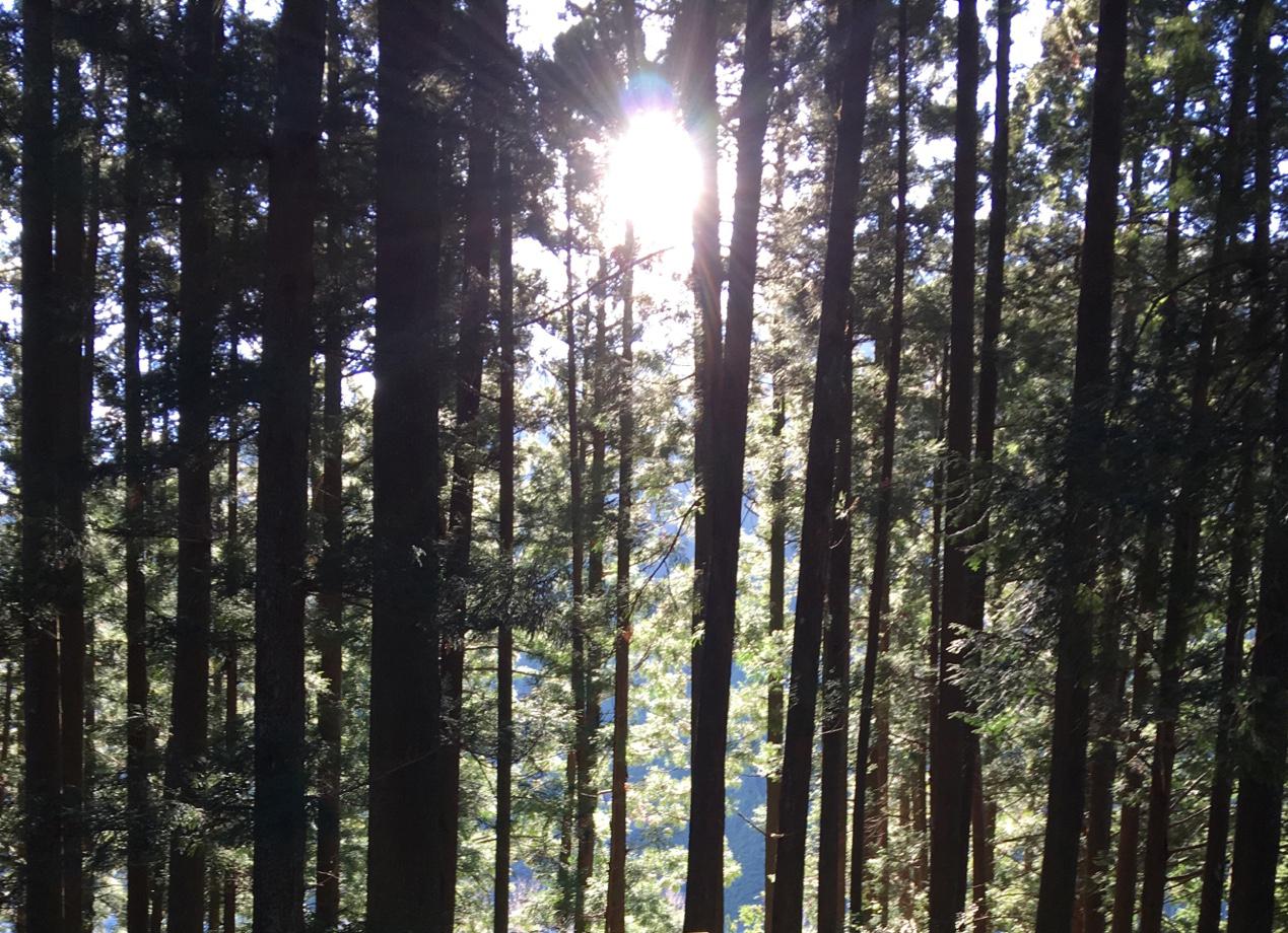 suzukisanchi's blog