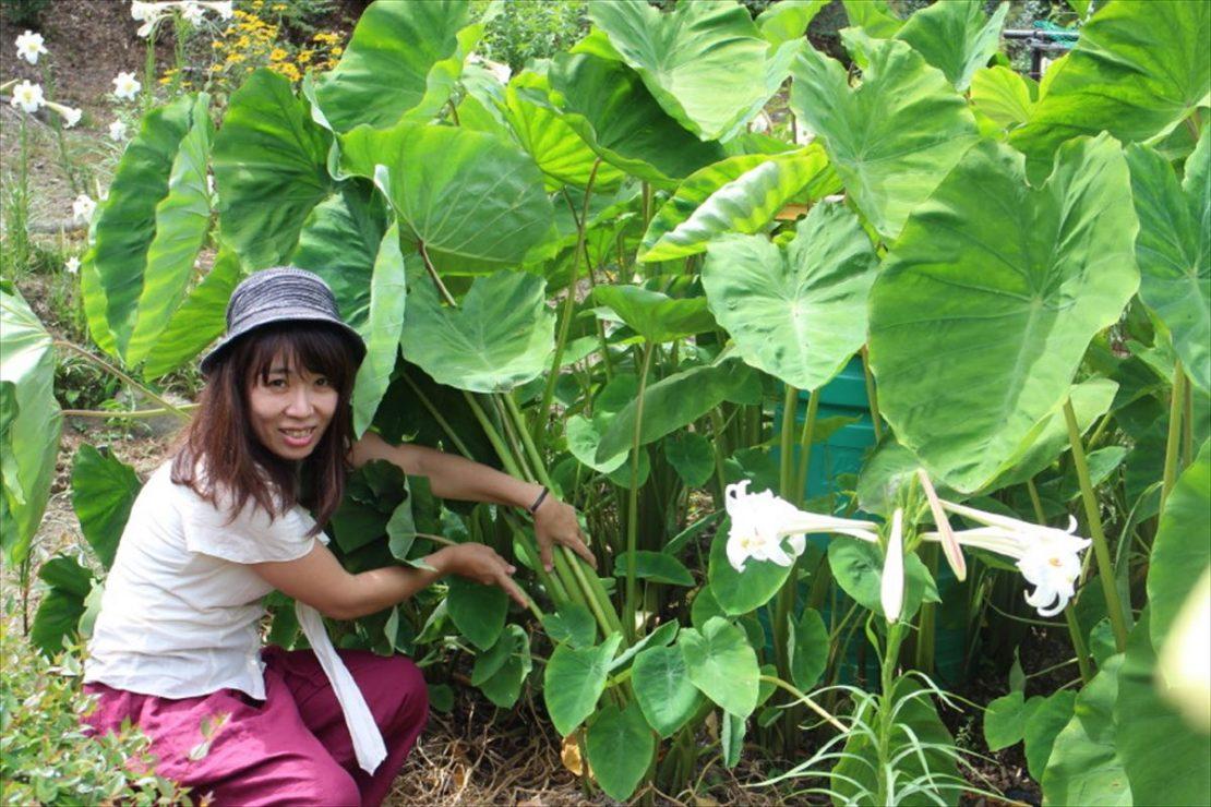 まるで物語の世界のような背の高い里芋畑。旬の野菜で作るジャム。