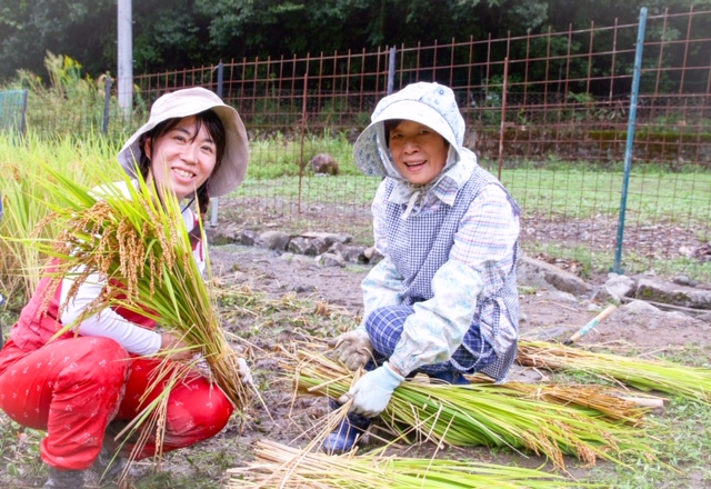 おじいちゃんもバンザーイ!雨にも負けず、今年もお米が収穫できました。