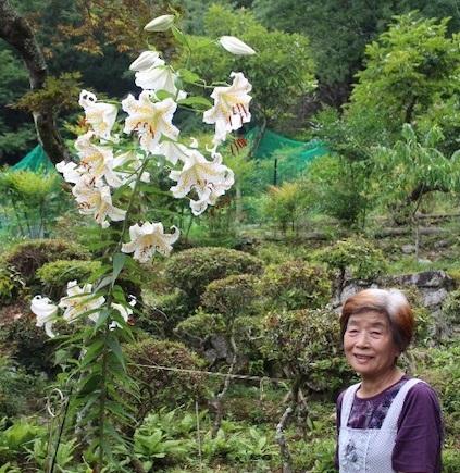 お花の王様、ヤマユリが咲くおばあちゃんの自慢のお庭