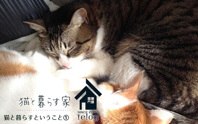 猫と暮らすということ①