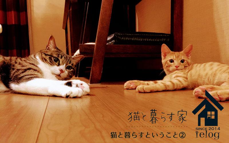 猫と暮らすということ②~心構え~